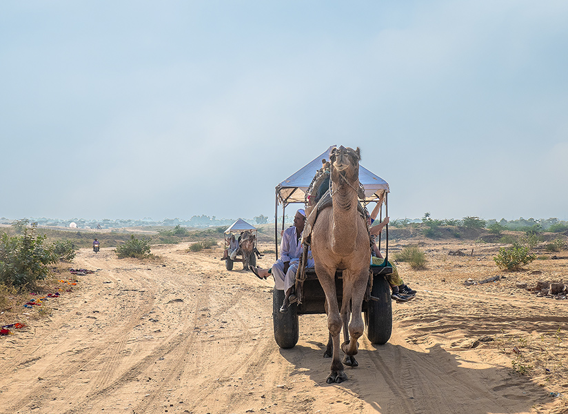 The camel carts were an efficient shuttle for the half-mile (0.8km) to the Pushkar Camel Fair.