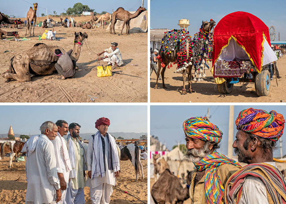 The camel camps were beginning to fill up when I arrived at the beginning of the Pushkar Mela Rajasthan. By the time I left, they were overflowing.