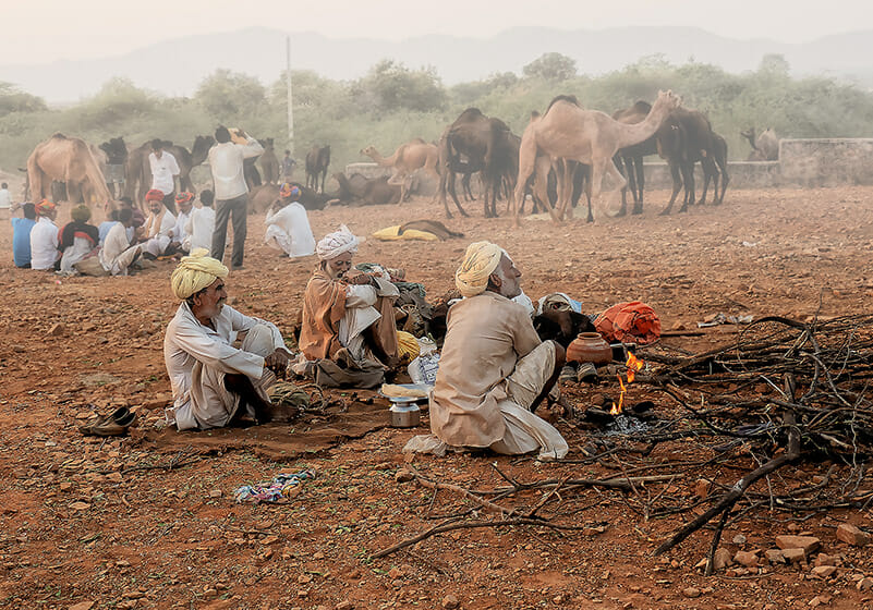 During the Pushkar Camel Festival at dusk, the camels are fed, and men smoke and gossip around the camp fires as women cook their evening meal.