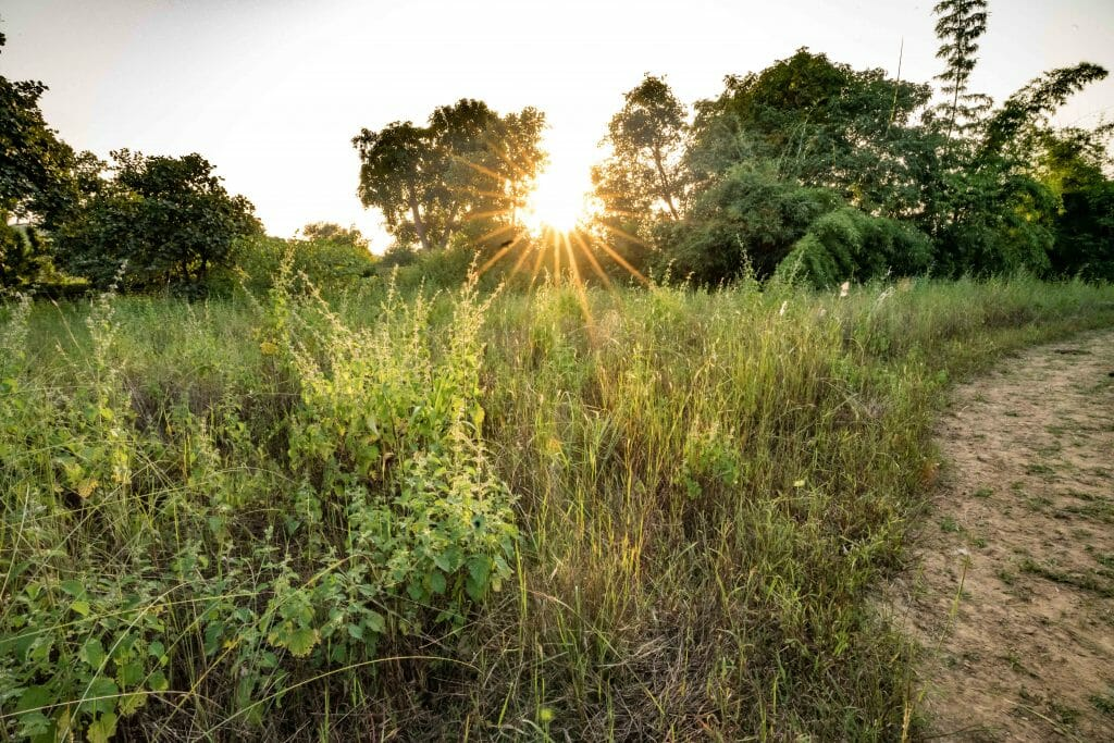 Meadow at Sunset in Bandhavgarh National Park
