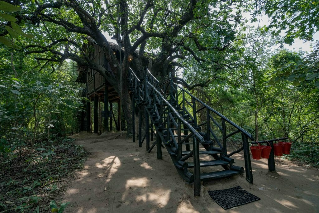 Luxury Treehouse at Safari Lodge in Madhya Pradesh