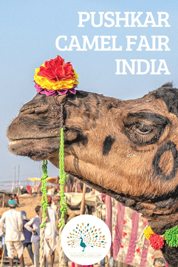 Pushkar Camel Fair India #India #Rajasthan #Travel #Culture #Festival #Traveltips #IndiaTravel