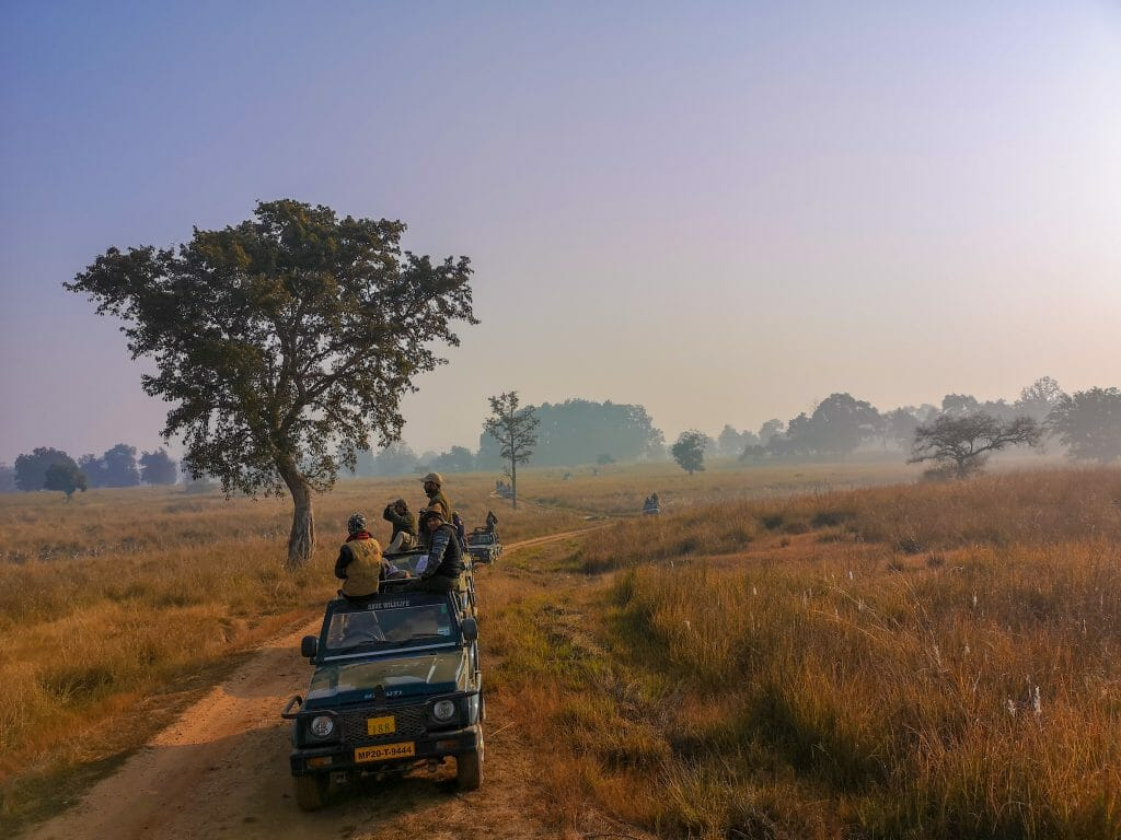 Safari jeeps on dirt road in flat grass fields - Indian Safari