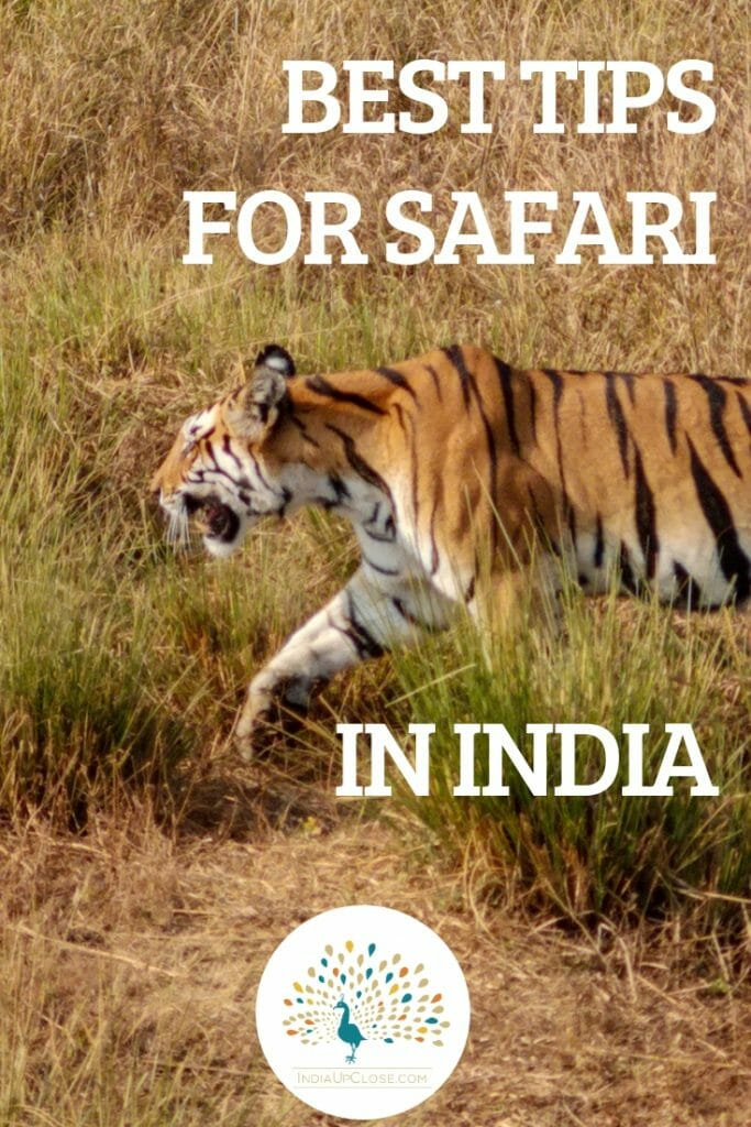 Tiger Safari in India - Top Tips #Safari #India #IndiaTravelTips #Safaritips #SafariPackingList #Wildlife #Indian #Travel #LuxuryTravel #Outdoors #Animals #Wildlifephotography #IndiaTravelTips #TravelTips #Traveler #Traveling #tiger #tigersafari