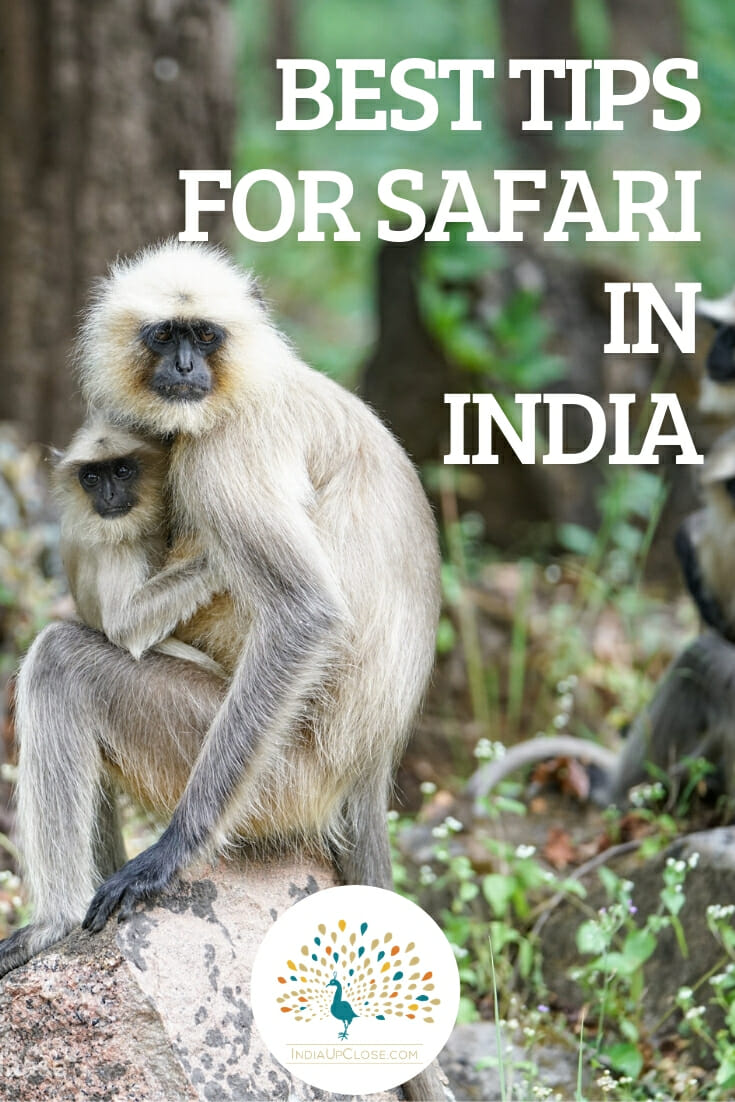 Tips for Safari in India - Indian Safari #Safari #India #IndiaTravelTips #Safaritips #SafariPackingList #Wildlife #Indian #Travel #LuxuryTravel #Outdoors #Animals #Wildlifephotography #IndiaTravelTips #TravelTips #Traveler #Traveling