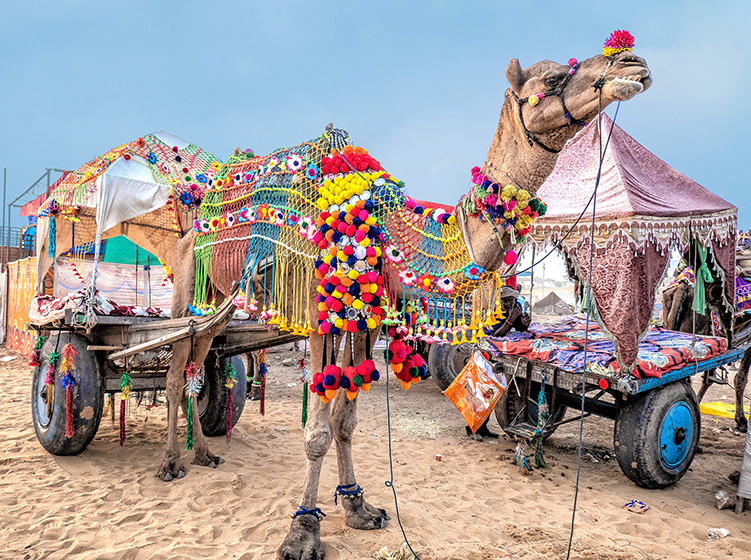 big camel with lots of colorful decoration